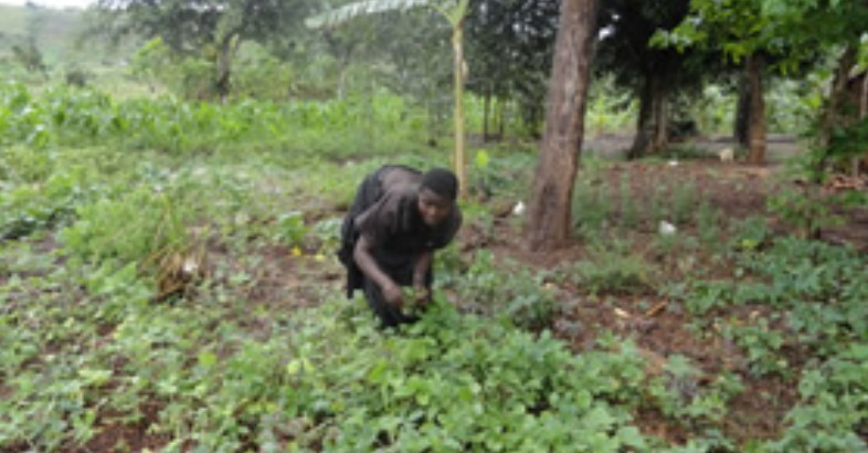 Kitchen Gardens improving ART adherence to People Living with HIV/AIDS
