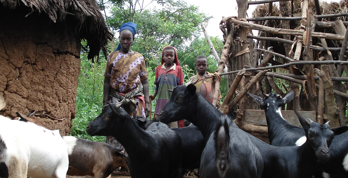 RAKAI LIVESTOCK PROJECT (funded by Evangelical Lutheran Church in America (ELCA)